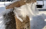 garniraetia - Snowfeathers