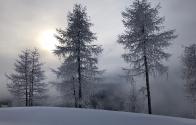 garniraetia - trees